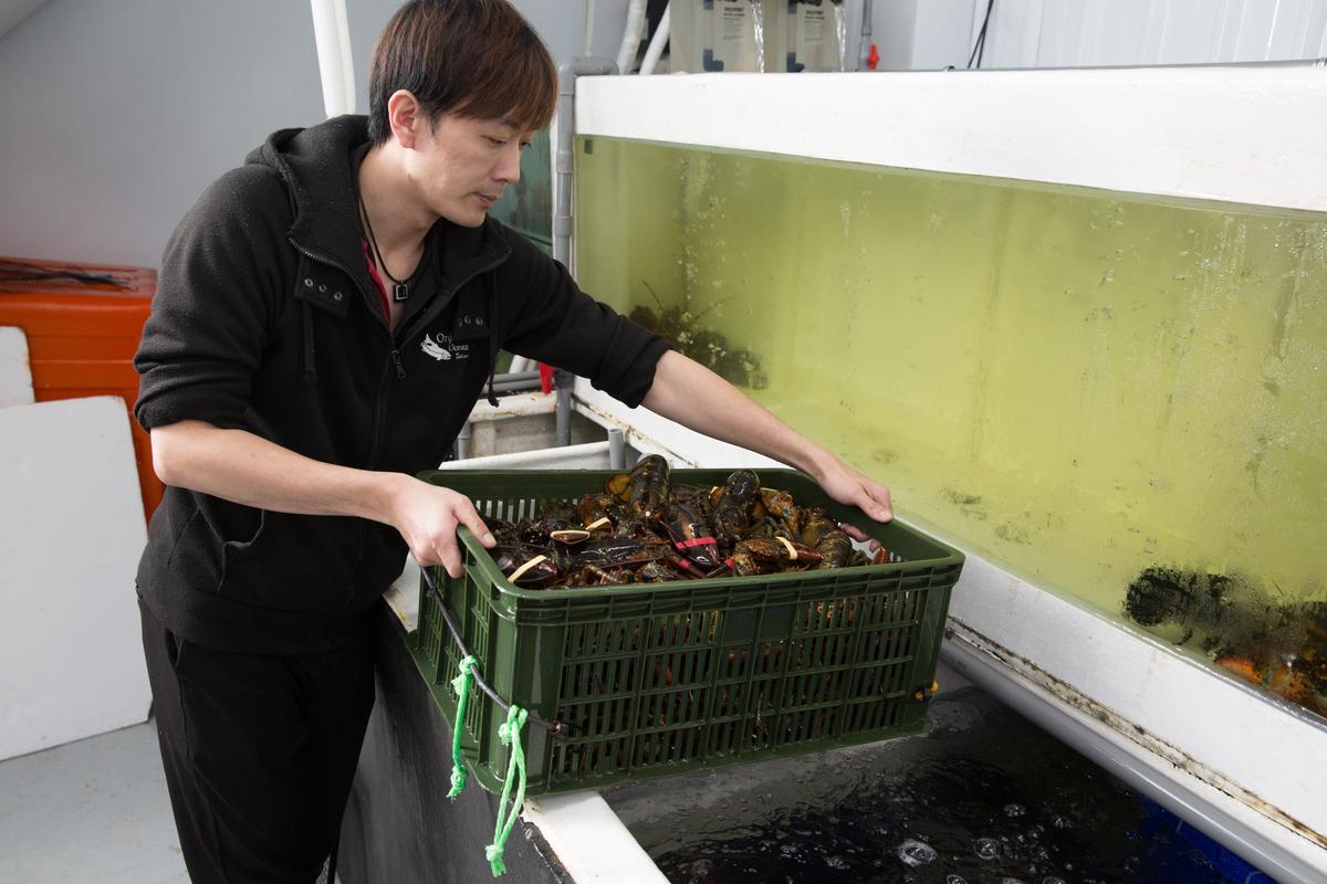 從水族箱裡現撈的龍蝦都還活蹦亂跳。
