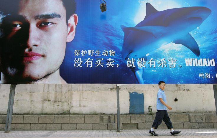 前NBA籃球球星姚明擔任護鯊大使,呼籲向魚翅說不。(擷自WildAid)