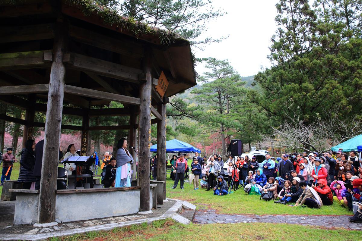 武陵農場每年都會在梅花盛開時,舉辦戶外音樂會。