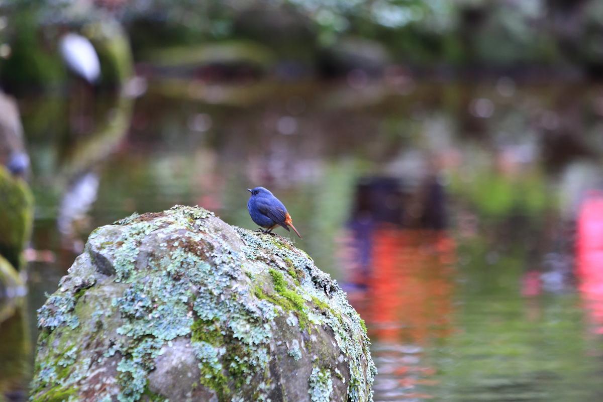 在水池邊也能發現不少暫時棲息在農場的鳥類。