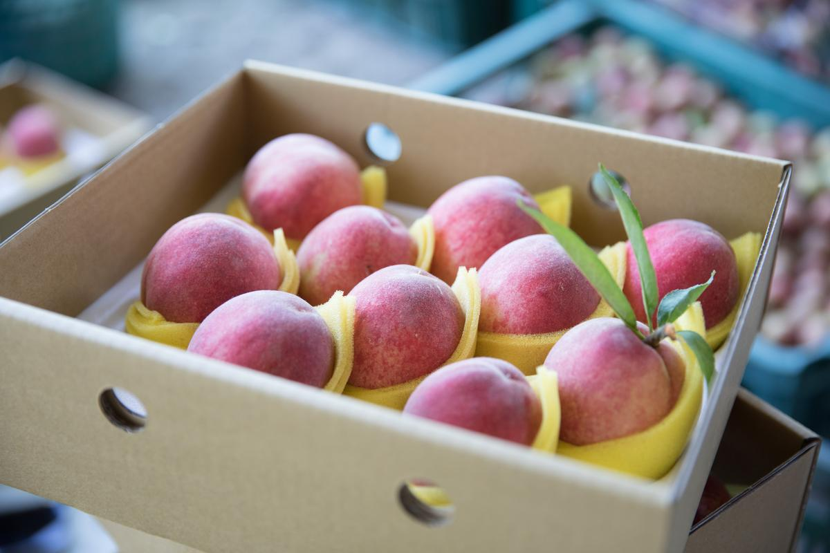 拉拉山的水蜜桃 根本下不了這條線