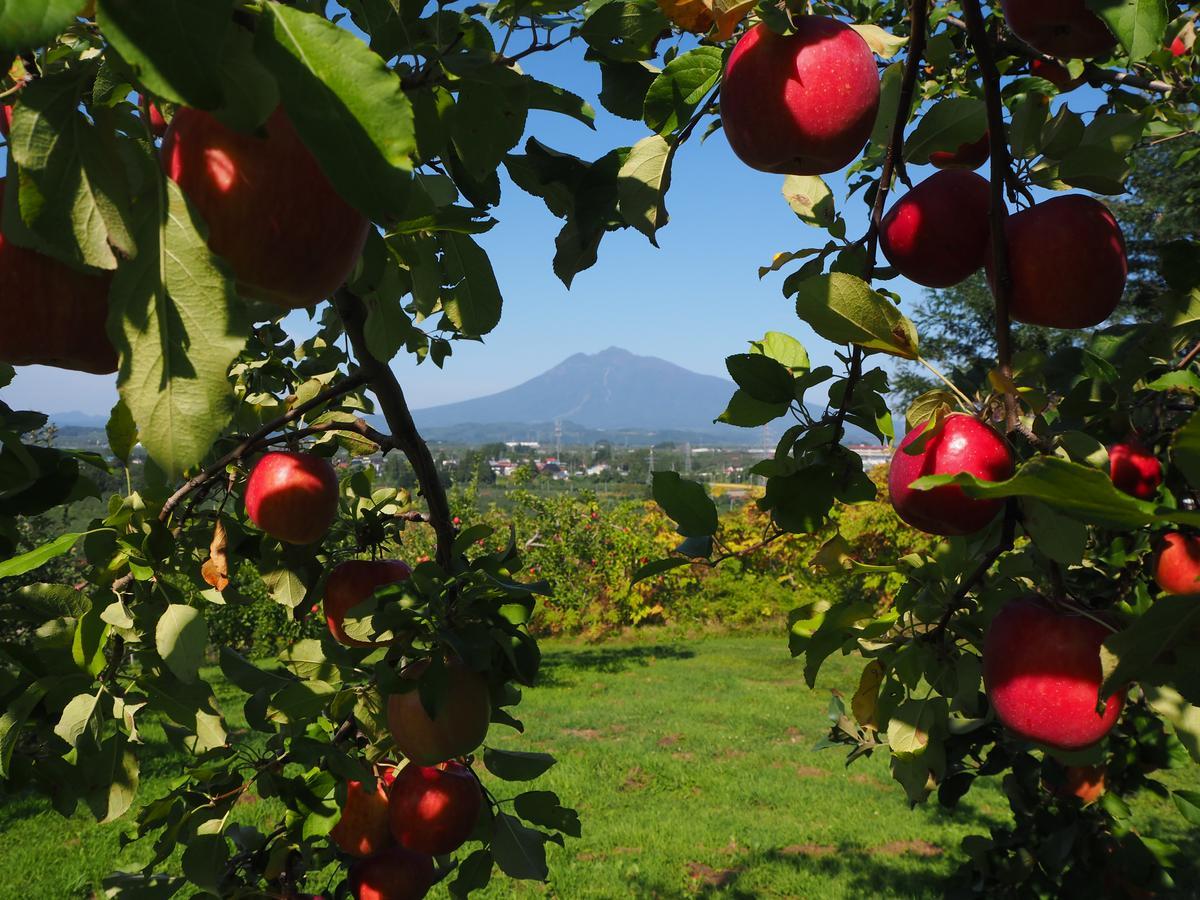 蘋果和岩木山同框,是最能代表青森秋天的景色。