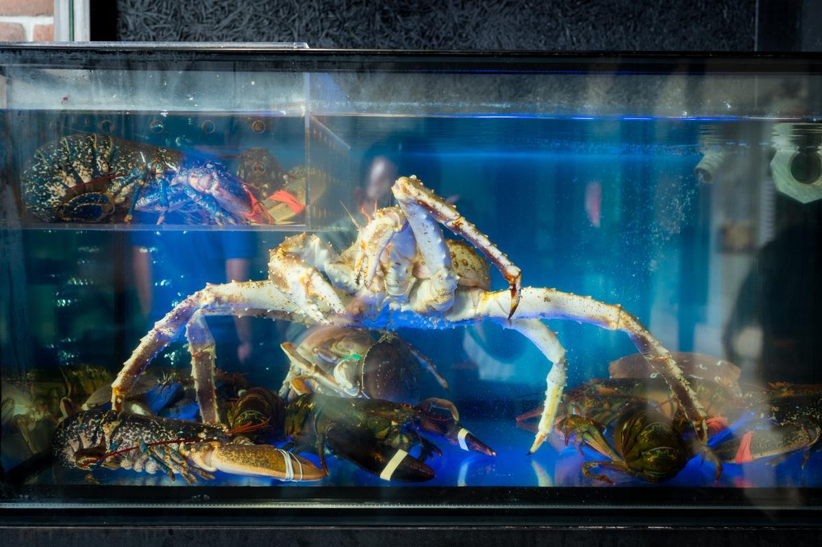 店內有水族箱,讓大型海鮮上桌時都是活跳跳的。