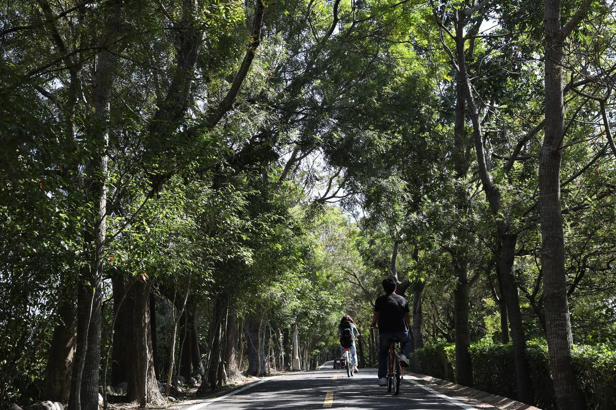 接東勢與豐原的東豐綠廊,騎乘自行車走訪非常愜意。